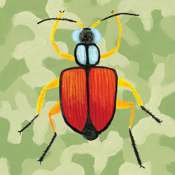 Oopsy Daisy/No Boundaries Green Camo Beetle
