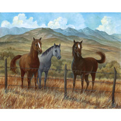 Appaloosa I Wall Art
